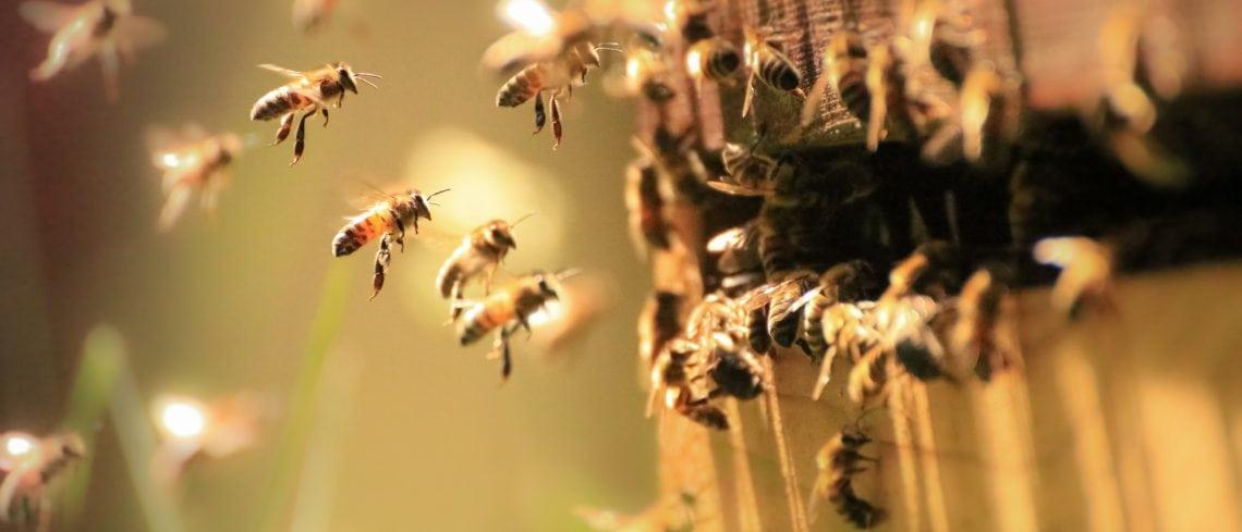 Protecting Pollinators: States Take the Reign on Pollinator Health