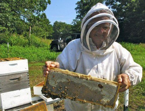Beekeepers Protect Hives From Pesticide Amid Virus Fight